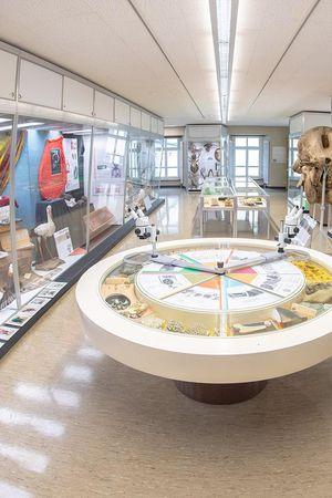 Naturkundemuseum Kollegium