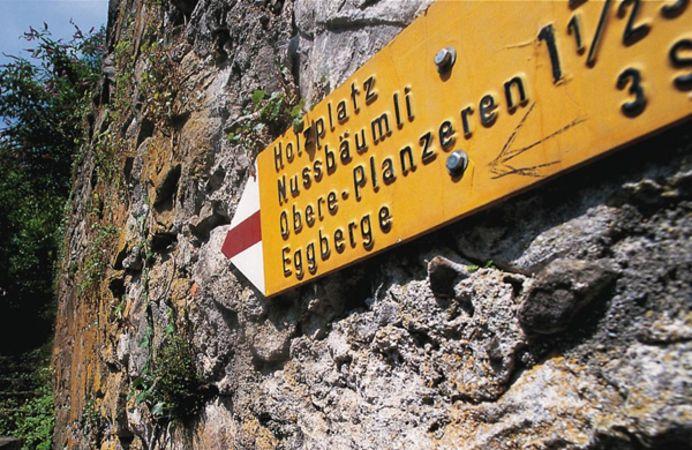 Altdorfer Bannwald